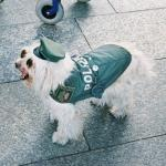 image polizeihund1103-jpg